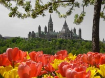 f74e5c5e96ee4360a2fb07245ddd2cc0ottawa-tulip-festival-images-9