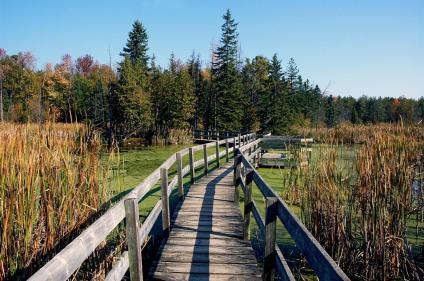 Greenbelt_Trail_JackPine_Scenic_Fall_WoodenPath_Water_HRN_0539