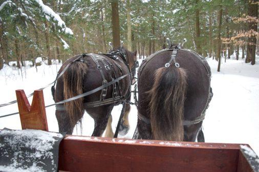 montebello-horse-4-1000x667
