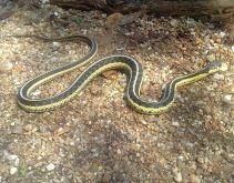Pink lake - serpent5 2