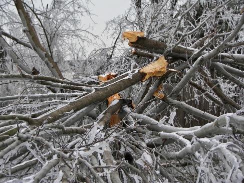 Ice-Storm 20