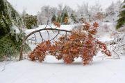 Ice-Storm 21
