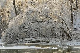 Ice-Storm 23