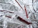 December 11, 2007 Ice Storm