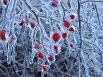 Ice-Storm 5