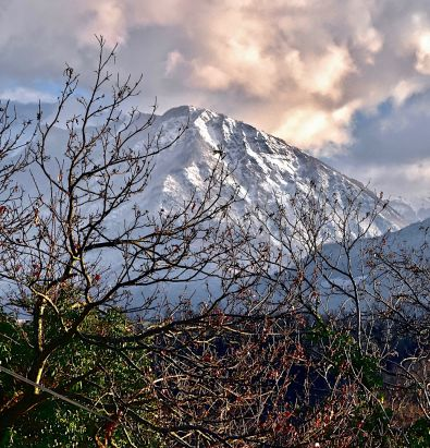 Montagne et buissons