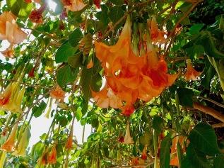 flowers-almunecar