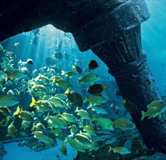 Bahamas, Atlantis, F