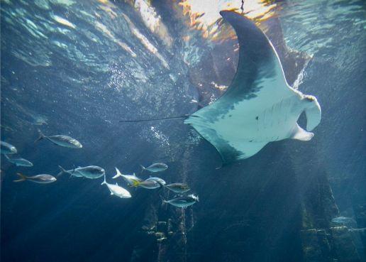 bahamas-paradise-island-nassau-aquarium-inside-atlantis-resort,2081525