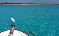 Bahamas, Bimini 1