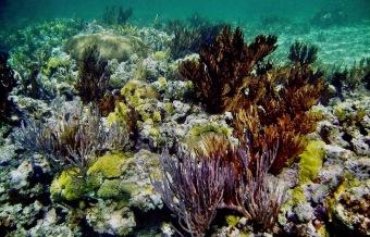 Bahamas, Recif,2 2