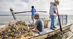 Apalachicola, ostréiculteurs