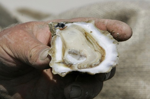 Apalachicola, Oyster, 5