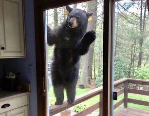 bear-wants-brownies