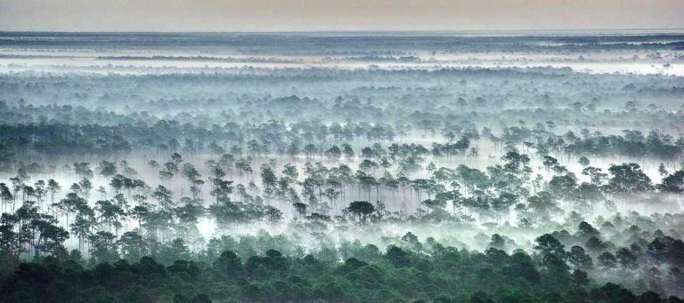 Forêt Floride brume