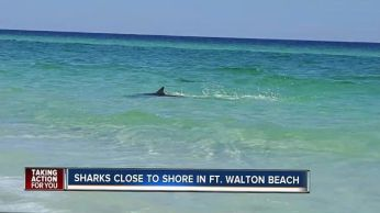 Requin, Walton Beach