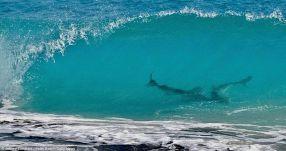 Requins Panhandle