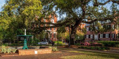 Savannah 3