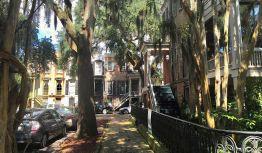 Savannah, J