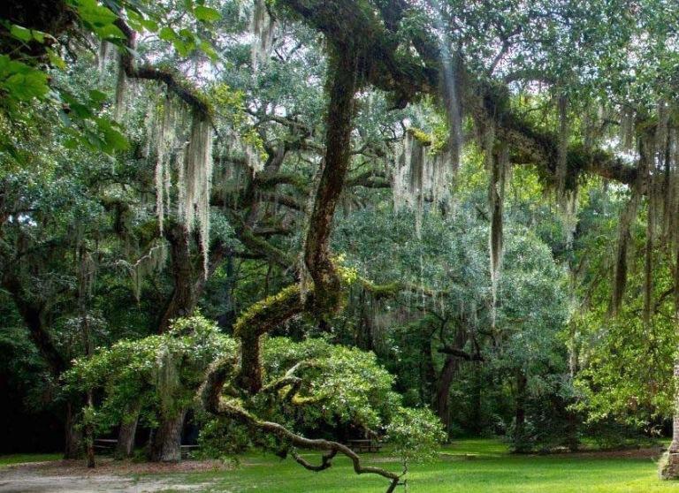 Vegetation, Floride  2.jpg